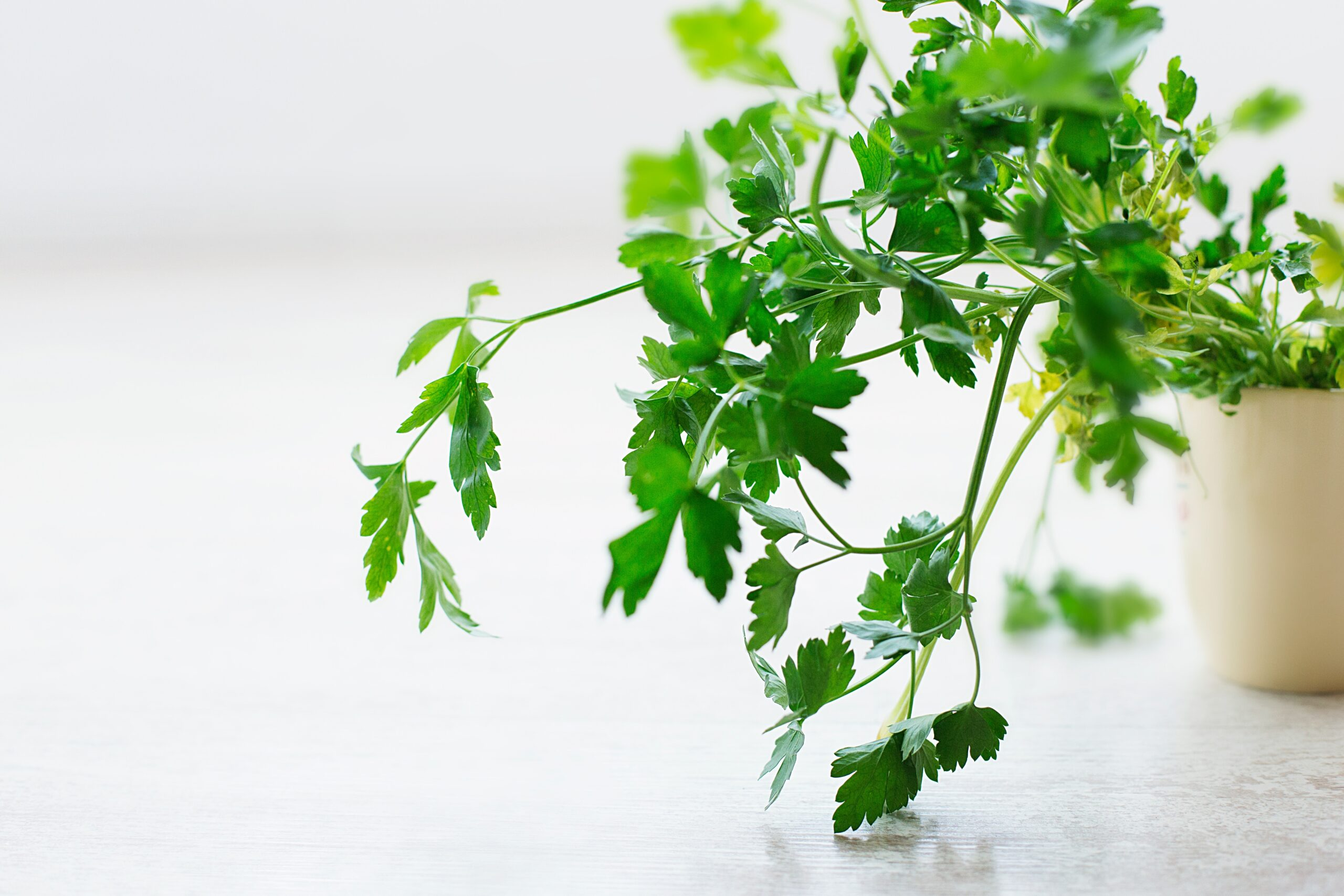 Boosting your Immune System with Parsley Dip